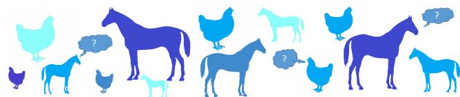 Bienvenu sur le site de l'équipe Cognition Ethologie Bien Etre animal