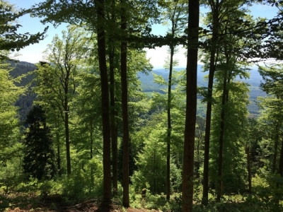 Forêt : Colkreuzweg - Breitenbach © DHÖTE Jean-François