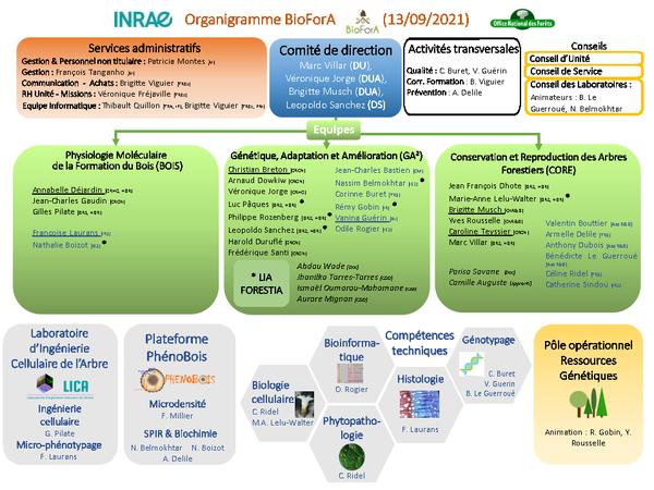 2021-06-11_Org_BioForA