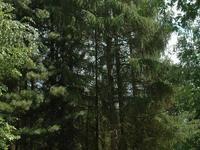 Arboretum de Ripaille_74