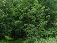 Arboretum de Roumare-Forêt Verte (76)