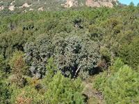 Arboretum de Sainte-Anastasie (15)