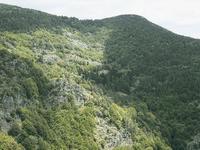 Arboretum du Col des Trois Soeurs (48)
