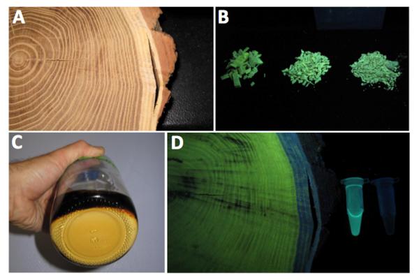 Valorisation des extraits fluorescents de bois de robinier (projet ValRob)