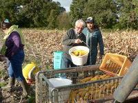 Récolte de maïs - oct 2013R