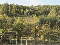 Réseaux d'arboretums réunionnais_974