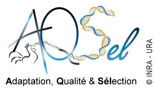 Logo équipe AQSél