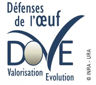 Logo équipe DOVE