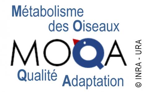 Logo équipe MOQA