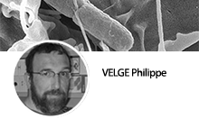 Signalling, carrier state and bacterial virulence team