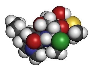 Structure chimique de l'antibiotique clindamycine. Les atomes sont représentés comme des sphères avec un code couleur conventionnel : hydrogène (blanc), carbone (gris), azote (bleu), oxygène (rouge), soufre (jaune), chlore (vert)