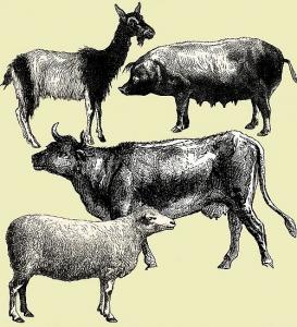 Différentes espèces animales