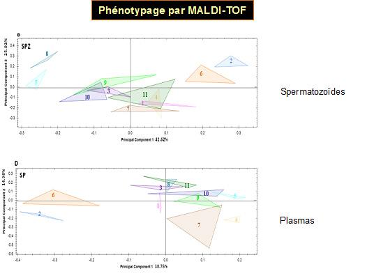 4-Phenotypage par MALDI-TOF