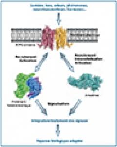 récepteurs couplés aux protéines G