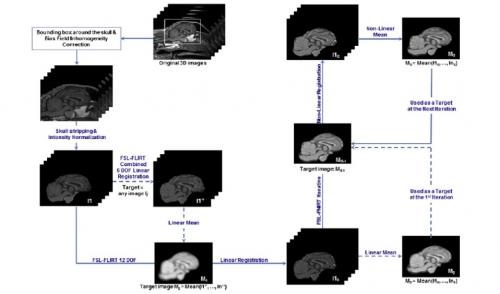 Protocoles d'analyses IRM sur le modèle ovin