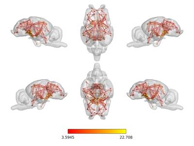 Réseau neuronal de repos chez la brebis imagé par IRM