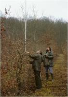 Mesure de hauteur sur une plantation comparative de chêne