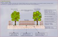 Implantation agroforesterie