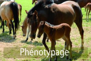 Phénotypage