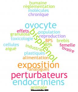 Effets des perturbateurs endocriniens sur la fonction ovarienne