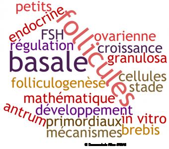 Régulation de la folliculogenèse basale